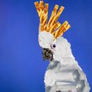 fugl collage